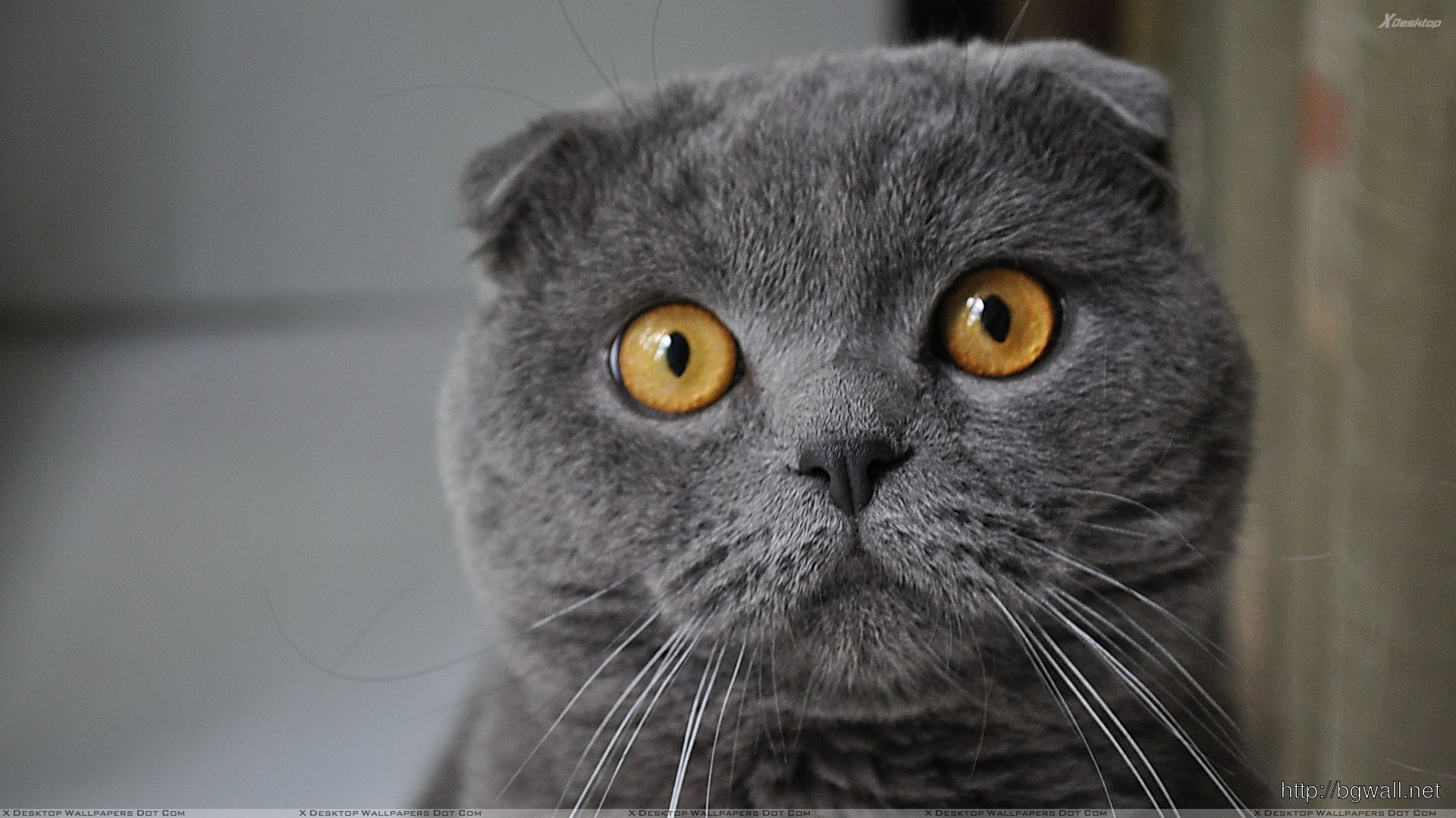 Black Cat And Brown Eyes Face Closeup Wallpaper Full Size