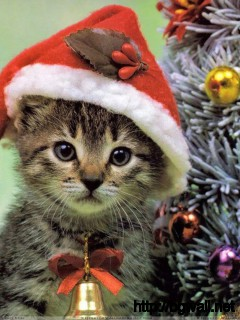 Little Cat On Christmas Eve Wallpaper Full Size