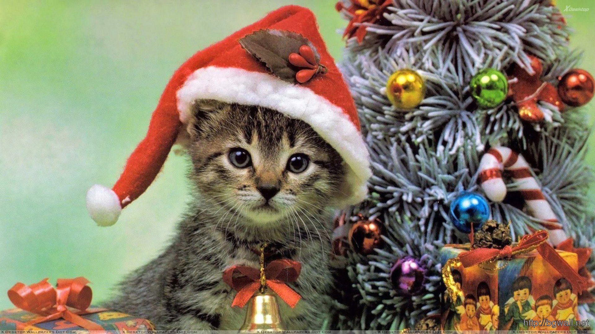 Little Cat On Christmas Eve Wallpaper Full Size