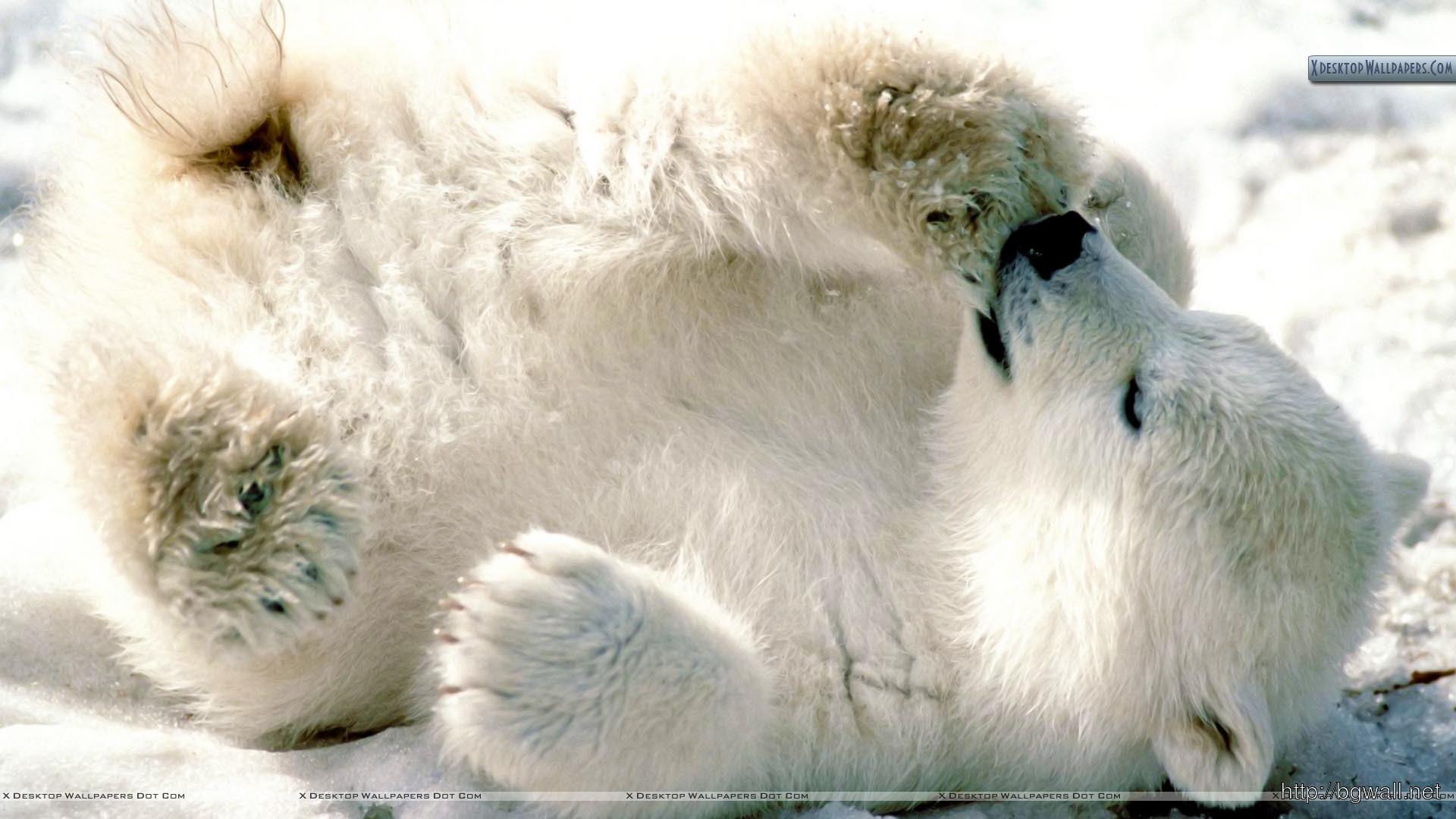 Playful Baby Polar Bear Wallpaper Full Size