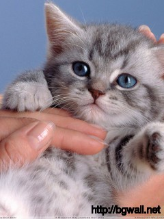 Small Cat In Hand Looking Very Cute Wallpaper Full Size