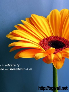 The Flower That Blooms In Adversity Is The Most Rare And Beautiful Of Full Size