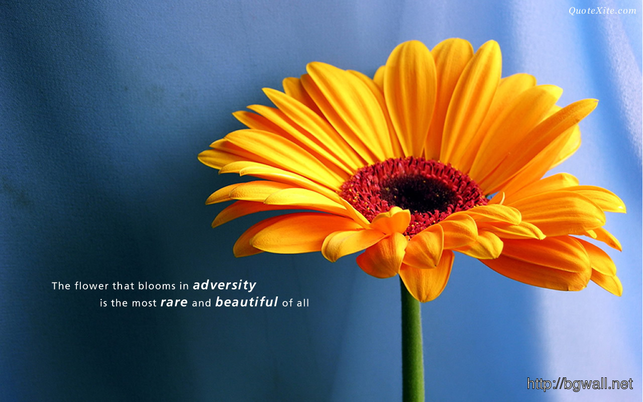 The Flower That Blooms In Adversity Is The Most Rare And Beautiful – Backg