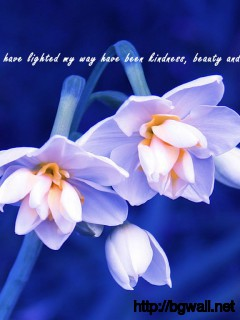 The Ideas That Have Lighted My Way Have Been Kindness Beauty And Full Size