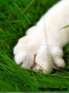 White Dog Paw Closeup On Green Grass Wallpaper Full Size