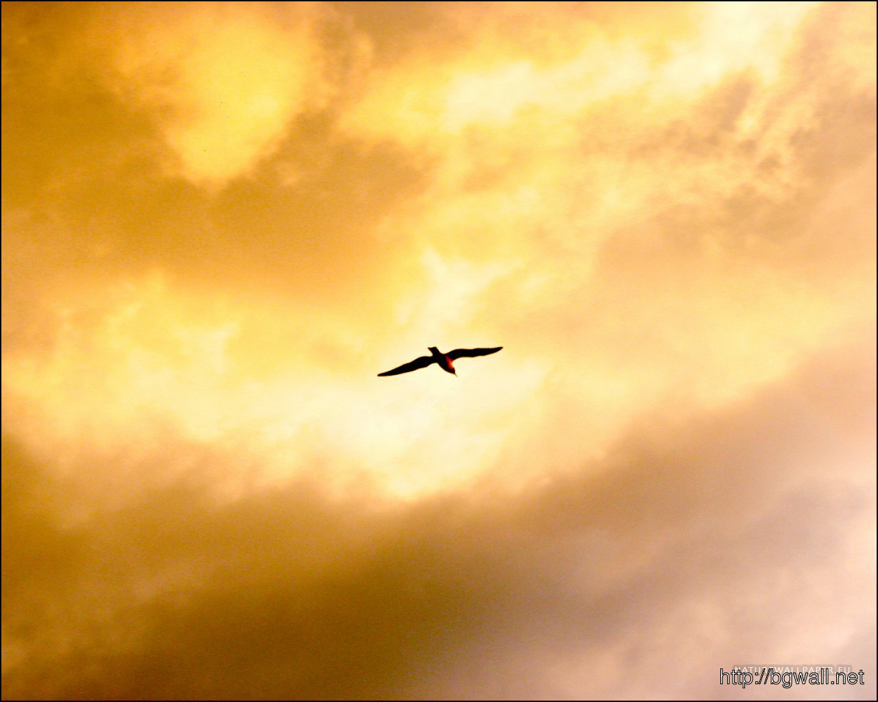 1280x1024 Wallpaper Flying Bird Wallpaper Background