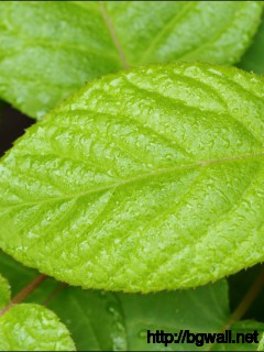 1280x1024 Wallpaper Green Leaf With Water Drops Wallpaper Background Full Size
