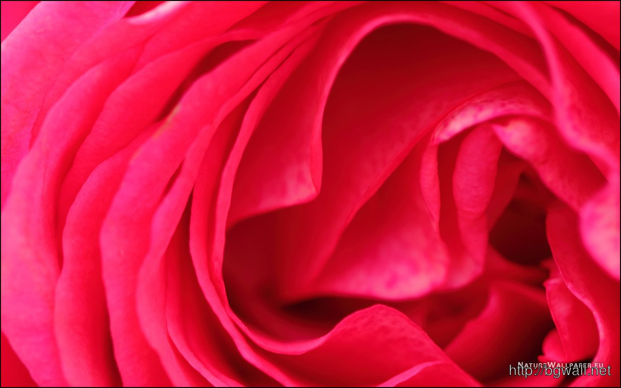 1280x800 Wallpaper Rose Petals Wallpaper Background Full Size