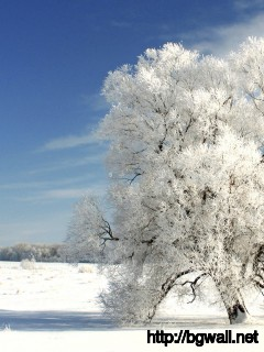 1360x768 Wallpaper Winter Tree On A Cold Winter Day Wallpaper Full Size