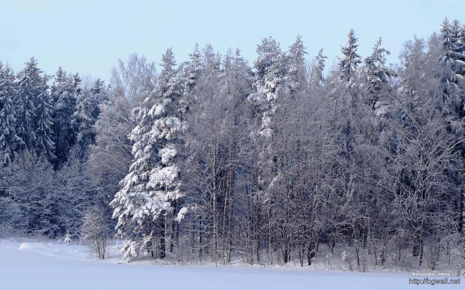 1920x1200 Wallpaper Winter Forest Scene Wallpaper Background Full Size