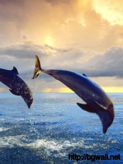 Bottlenose Dolphins Full Size