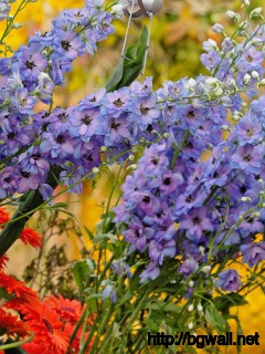 Colorful Flowers Wallpaper 875 Full Size