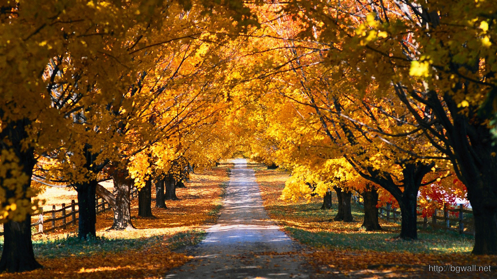 Country Road In The Fall Wallpaper 11542 Background