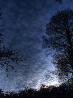 Download Night Sky In The Forest Wallpaper Full Size