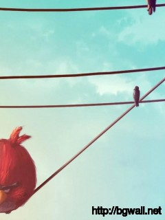 Download Red Angry Bird On The Wire Wallpaper Full Size