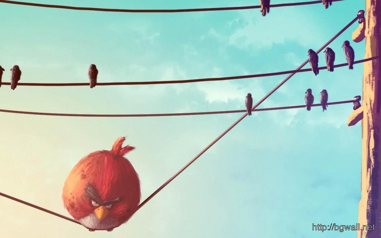 Download Red Angry Bird On The Wire Wallpaper Background