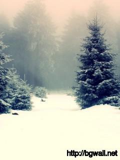 Download Snowy Fir Trees Wallpaper Full Size
