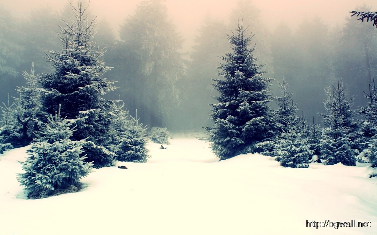 Download Snowy Fir Trees Wallpaper