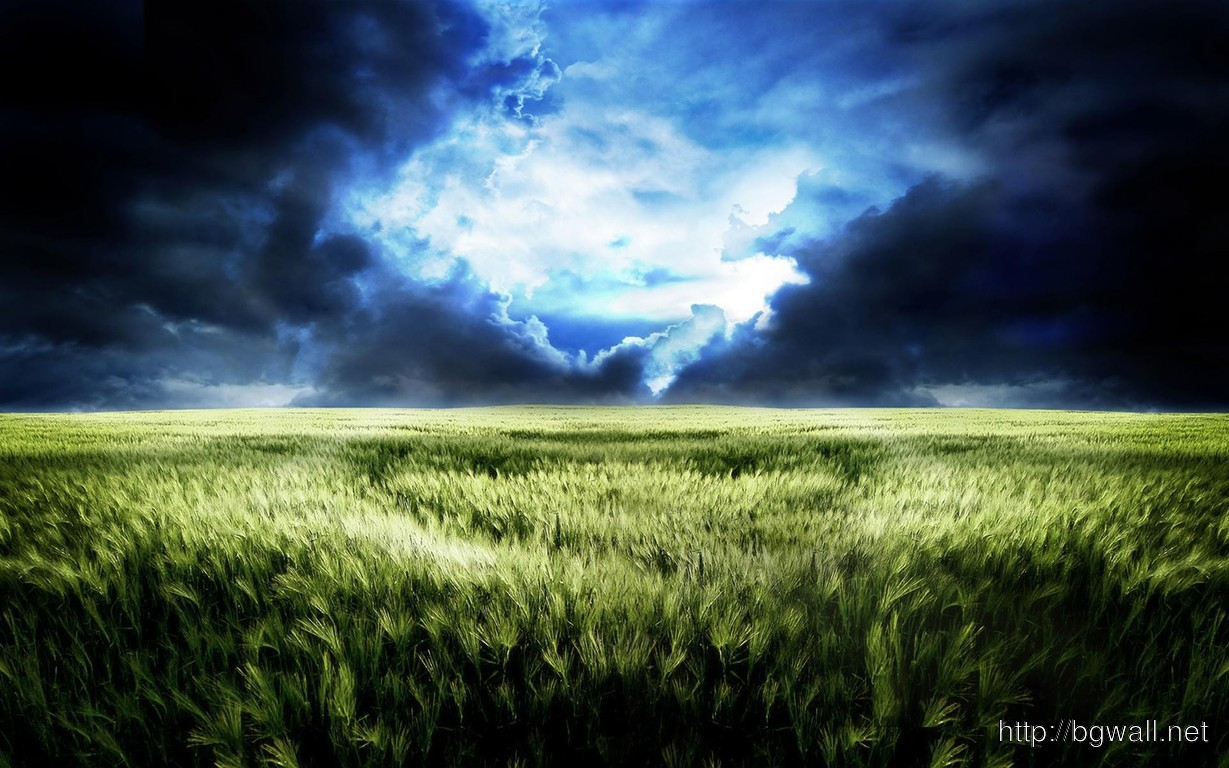 Download Storm Clouds Over Wheat Field Wallpaper Full Size