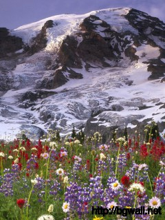 Download Wildflowers In The Mountain Meadow Wallpaper Full Size