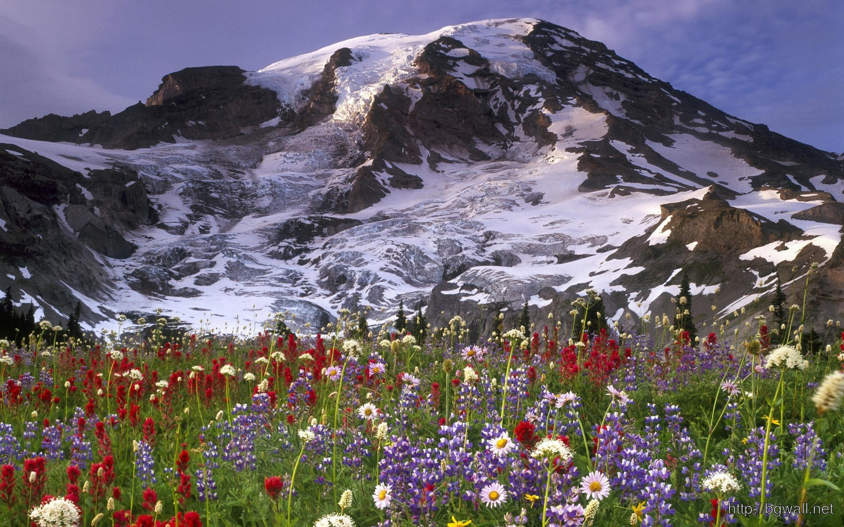 Download Wildflowers In The Mountain Meadow Wallpaper