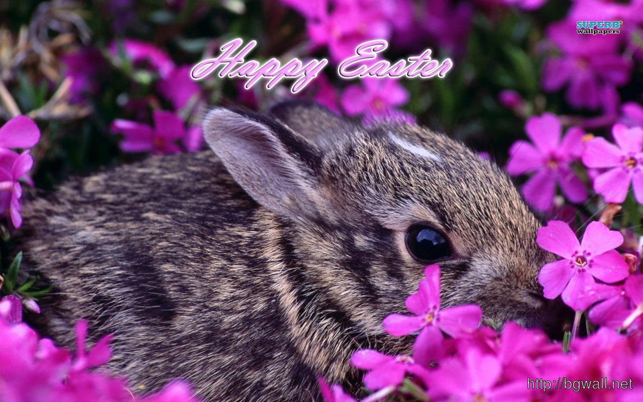 Easter bunny wallpaper background wallpaper hd - Easter bunny wallpaper ...