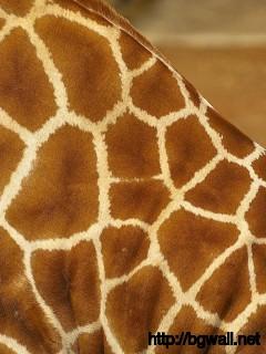Giraffe Patterns Full Size