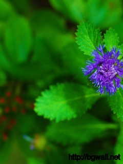 Mint Flower Wallpaper 10972 Full Size