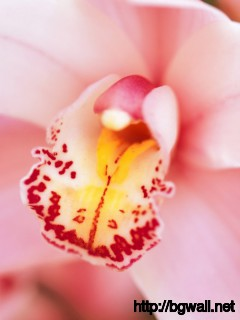 Pink Orchid Wallpaper 929 Full Size