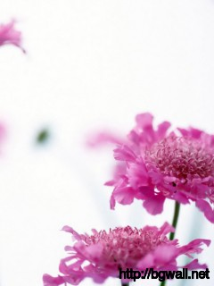 Pink Wildflowers Wallpaper 885 Full Size