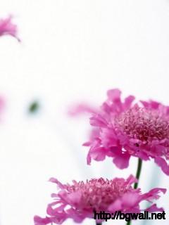 Pink Wildflowers Wallpaper 885 Full Size