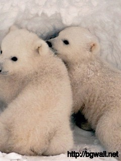 Polar Bears Are Cute Full Size