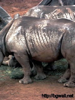 Rhino Full Size