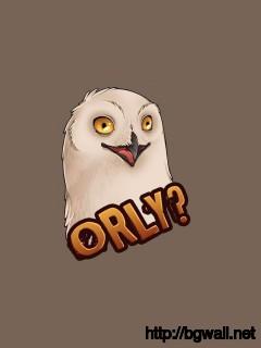 Rly Owl Wallpaper 9564 Full Size
