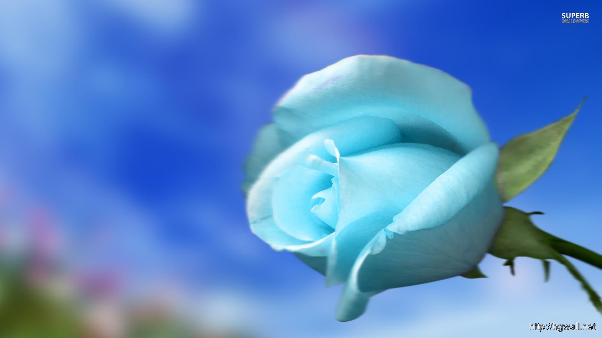 Sky Blue Rose Wallpaper Full Size
