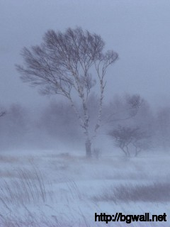 Snowstorm Wallpaper 8409 Full Size