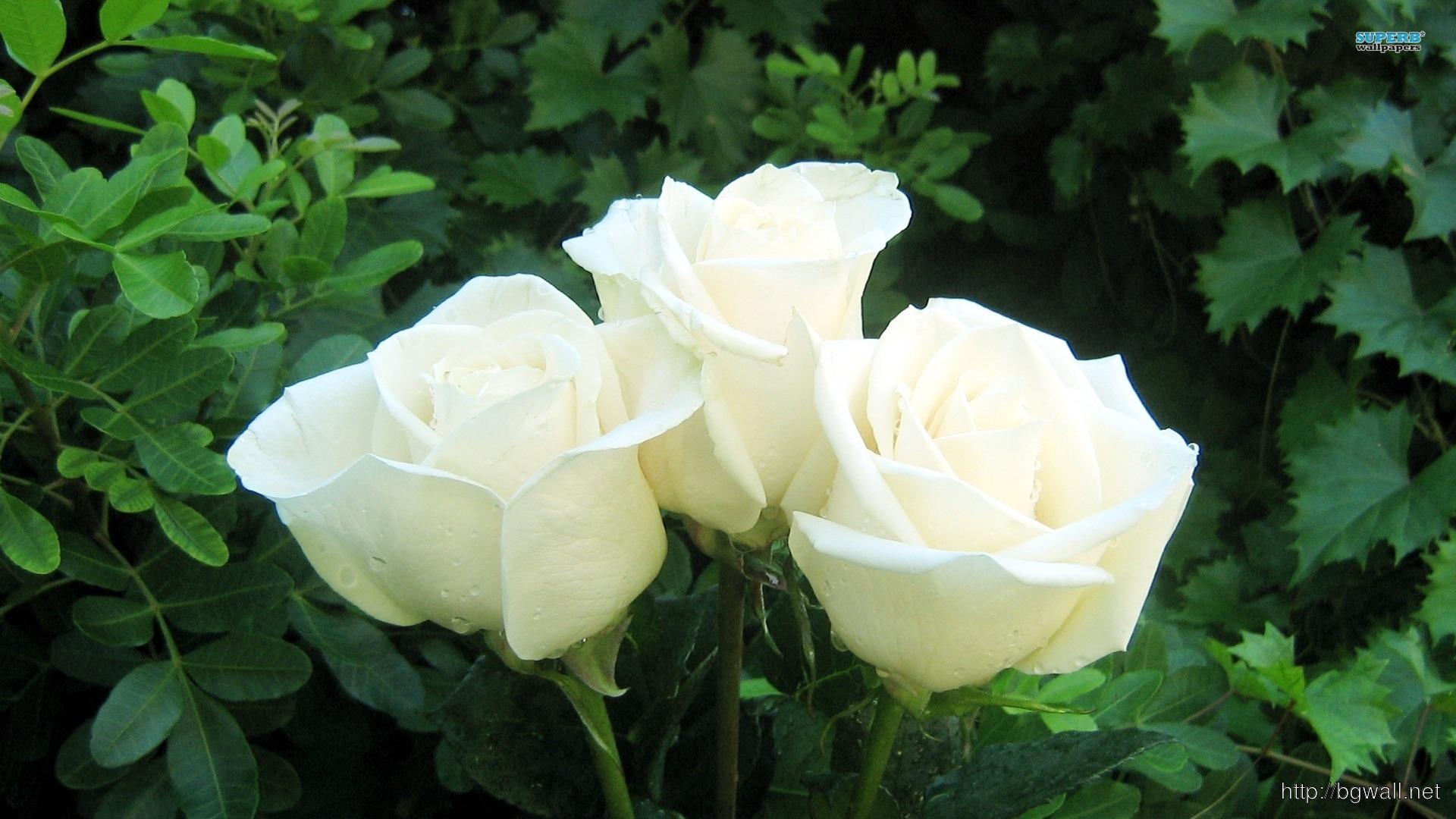 White Rose Bouquet Wallpaper Full Size