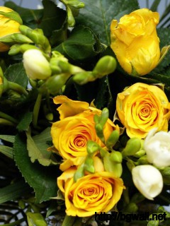 Yellow Rose Bouquet Wallpaper 1430 Full Size