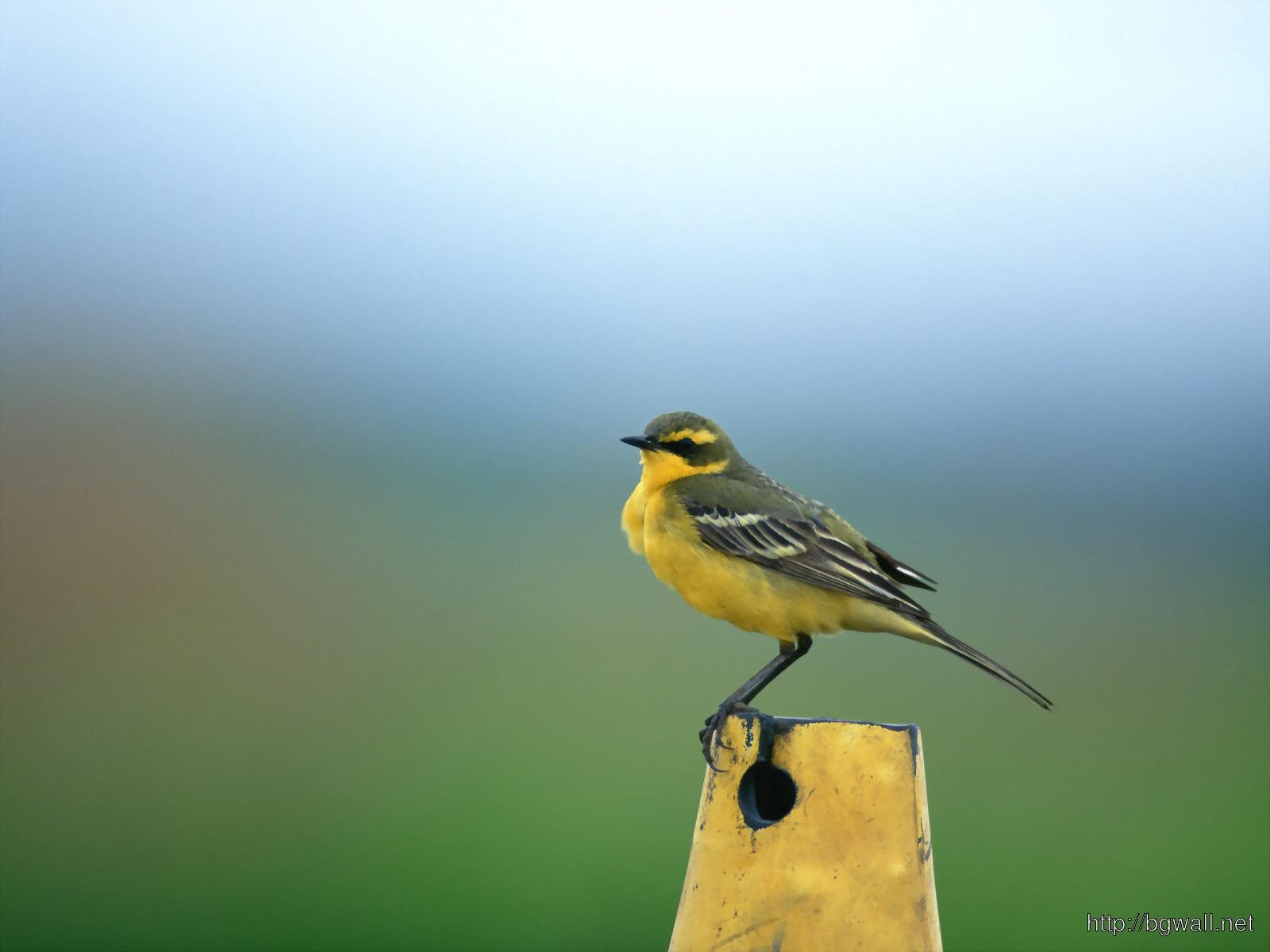 Bird-Desktop-Wallpaper