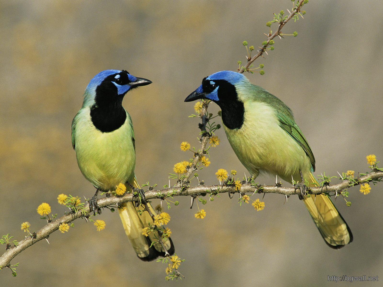 Bird-Downlod-Wallpaper