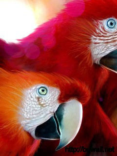 Bird-for-Ipad-Wallpaper