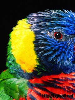 Bird-for-Nokia-5233-Wallpaper