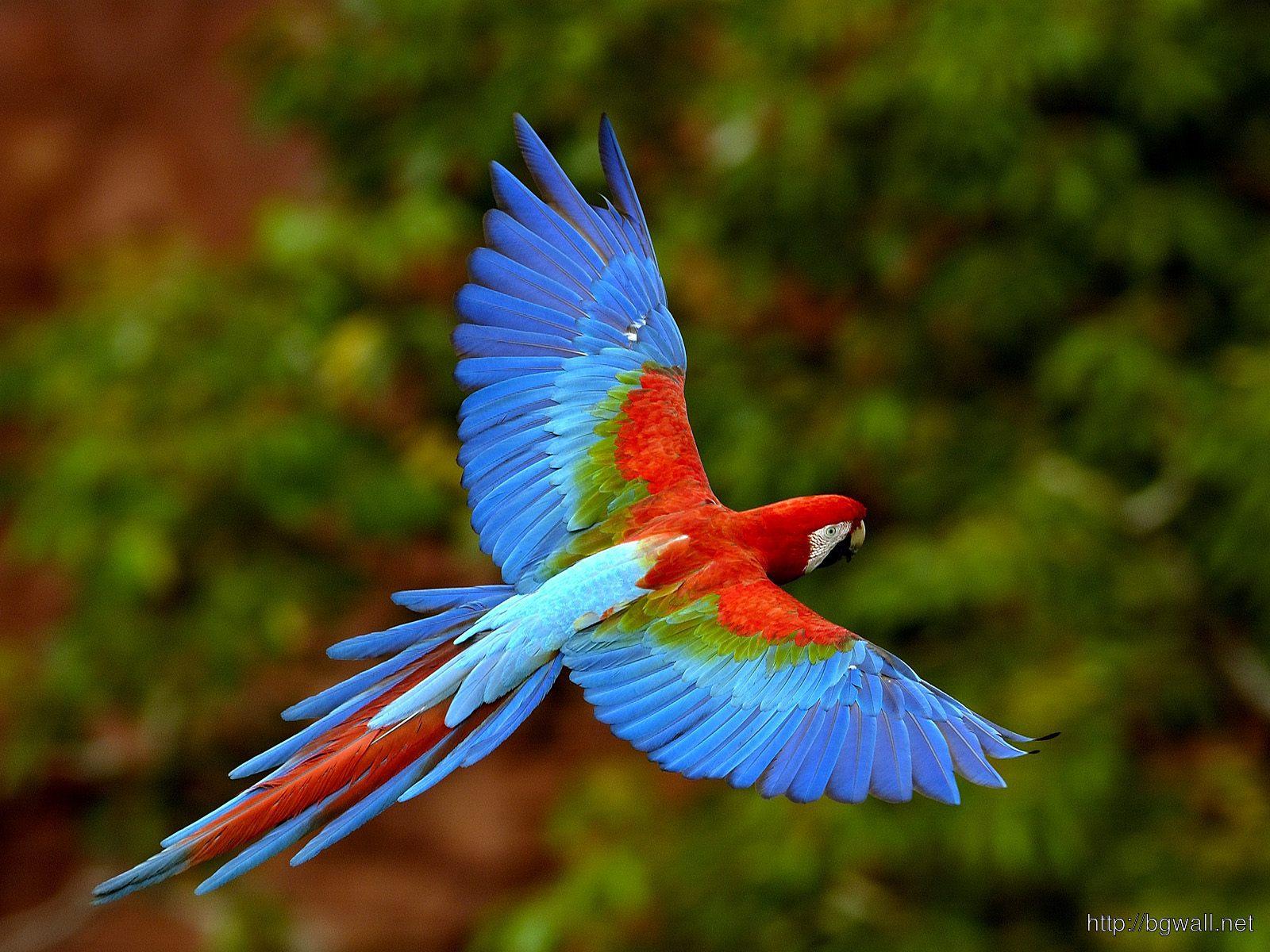 Bird-Pc-Wallpaper