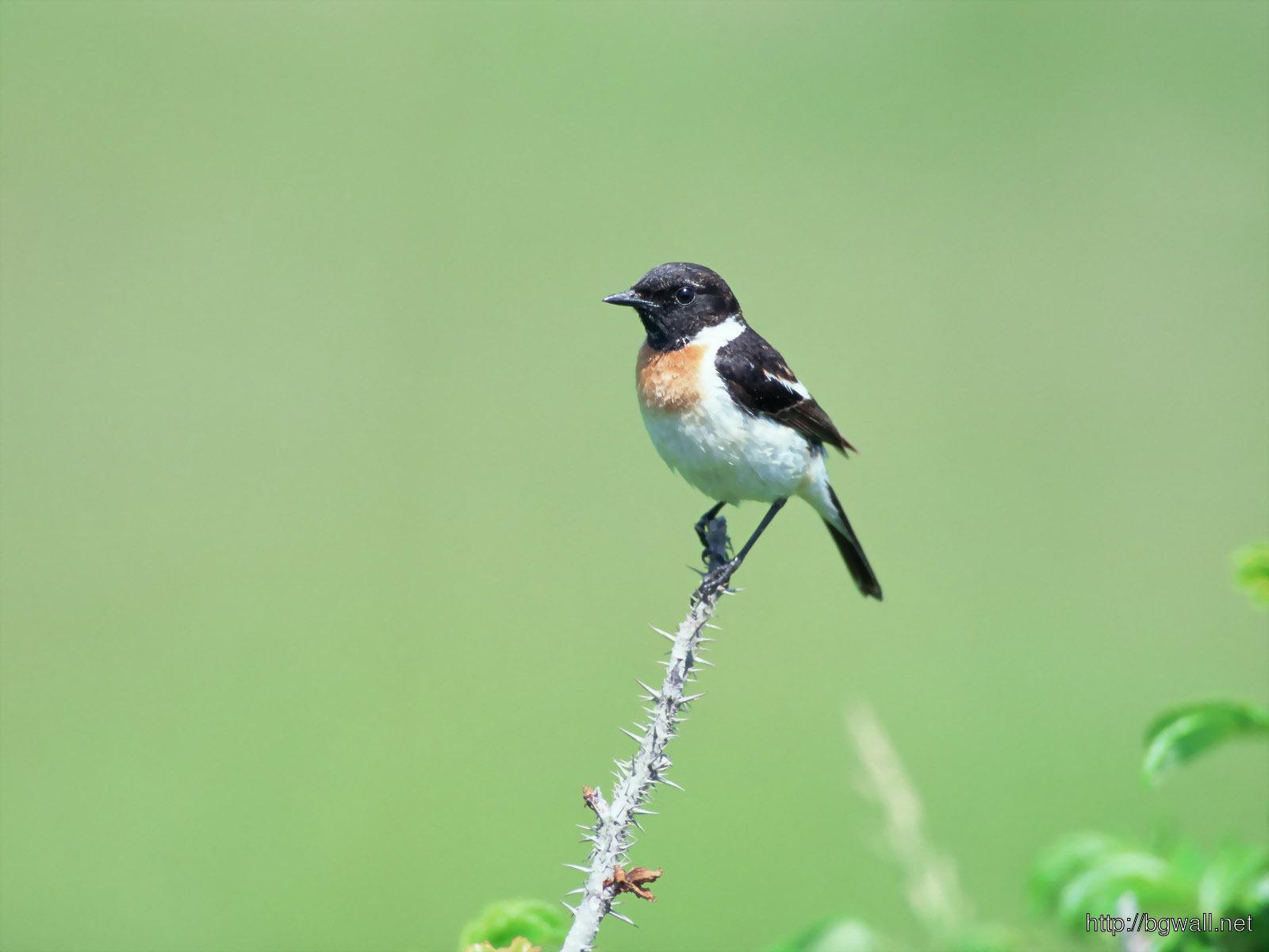 Bird-Pictures-Wallpaper