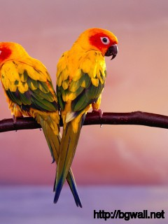 Bird-Widescreen-Wallpaper