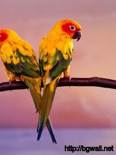 Bird-Widescreen-Wallpaper