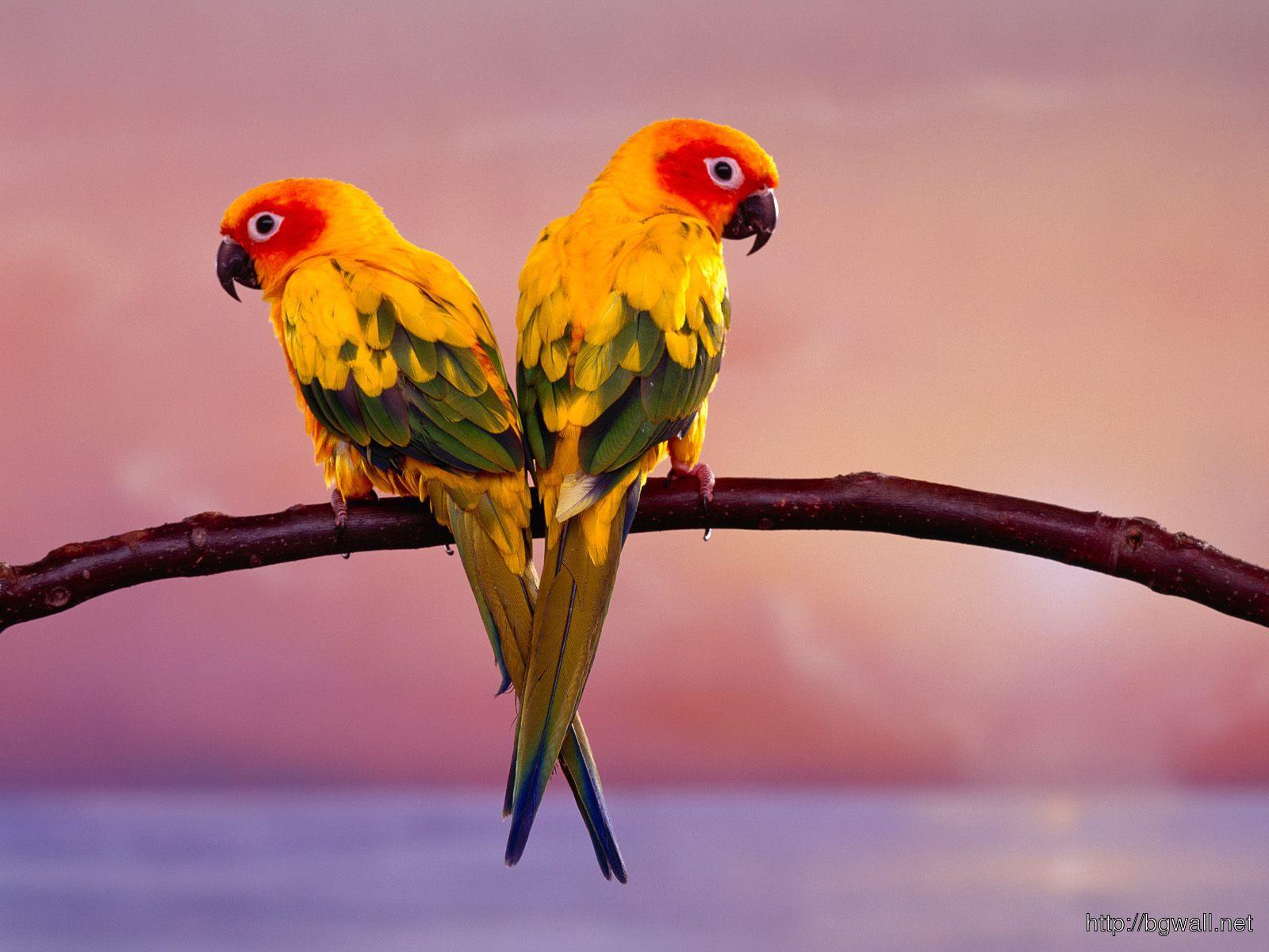 Bird Widescreen Wallpaper