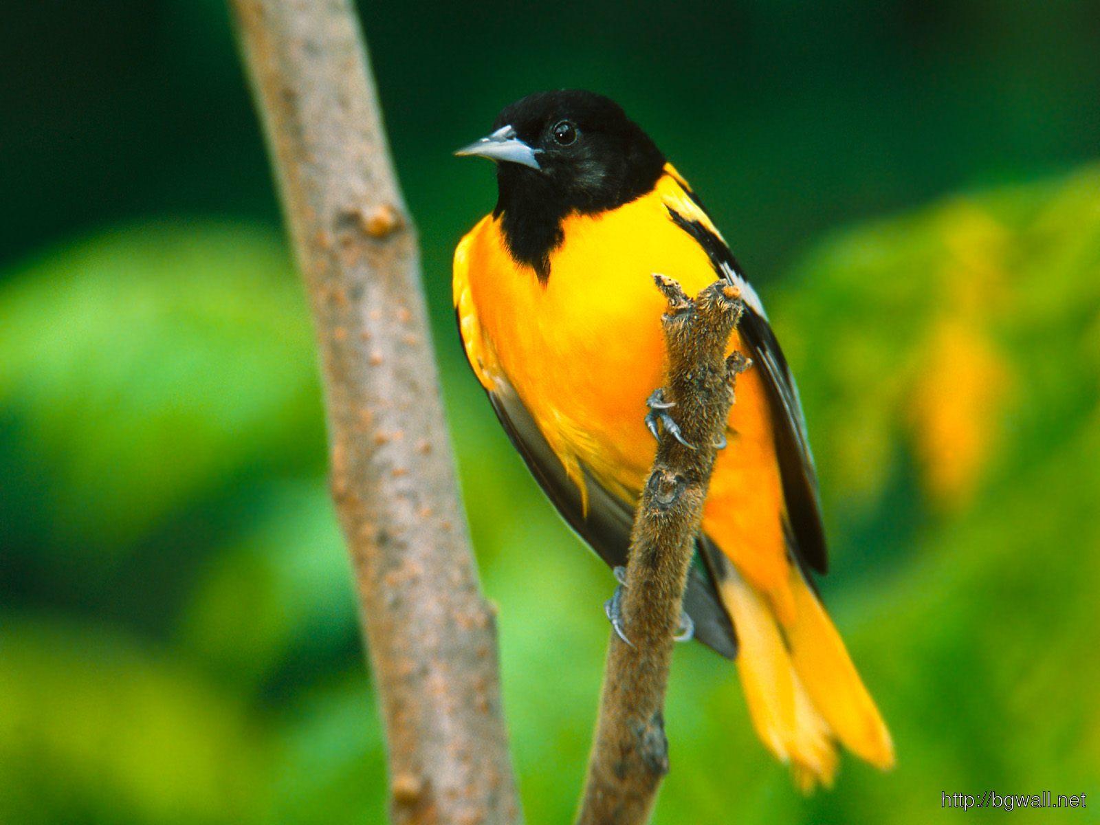 Cute Little Yellow Bird In Green Nature Background Wallpaper Hd