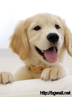 Golden-Retriever-Dog-Cute-Wallpaper