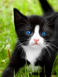 Kittens-Cats-Animal-Wallpaper